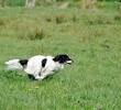 Jak biegać z psem, czyli sport z czworonogiem